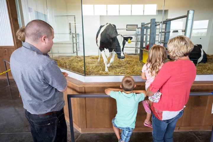Family observing cow at Farm Discovery Center in Wisconsin.