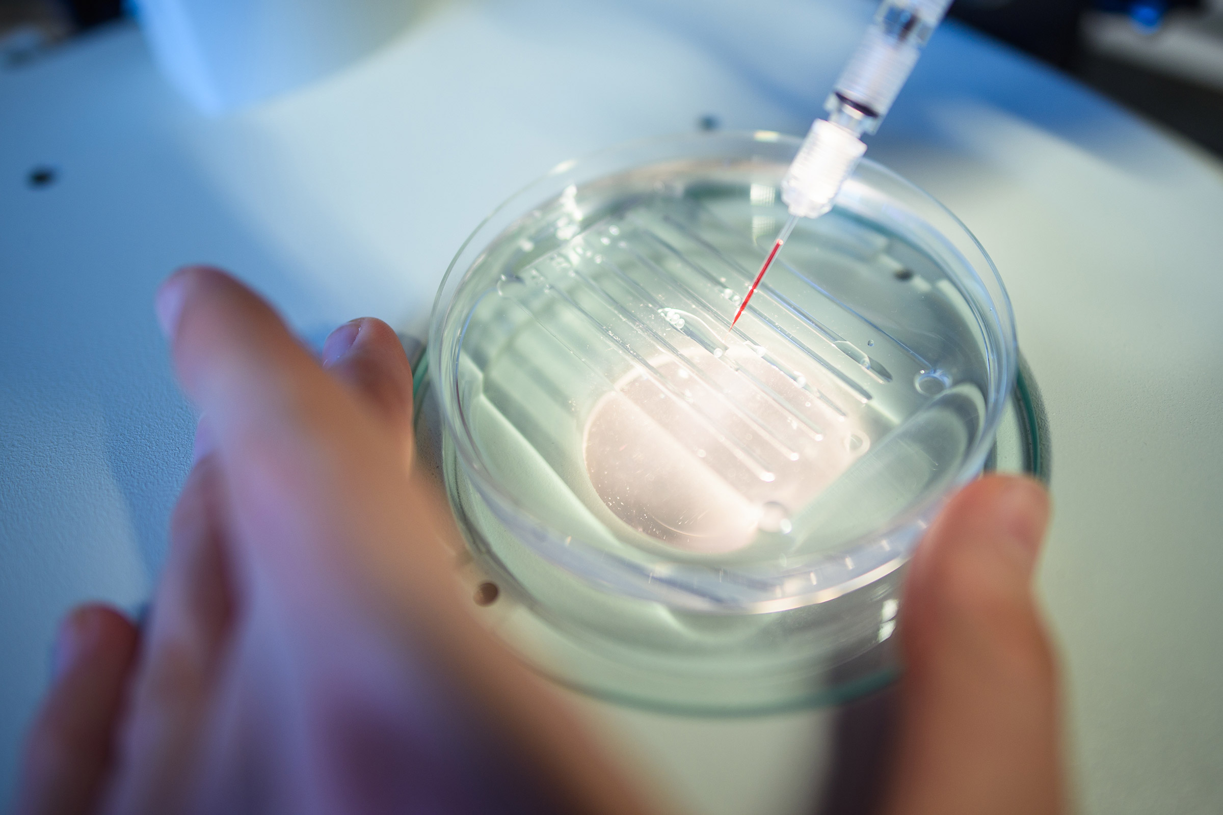 A researcher performs a CRISPR/Cas9 process at the Max-Delbrueck-Centre for Molecular Medicine in Berlin.