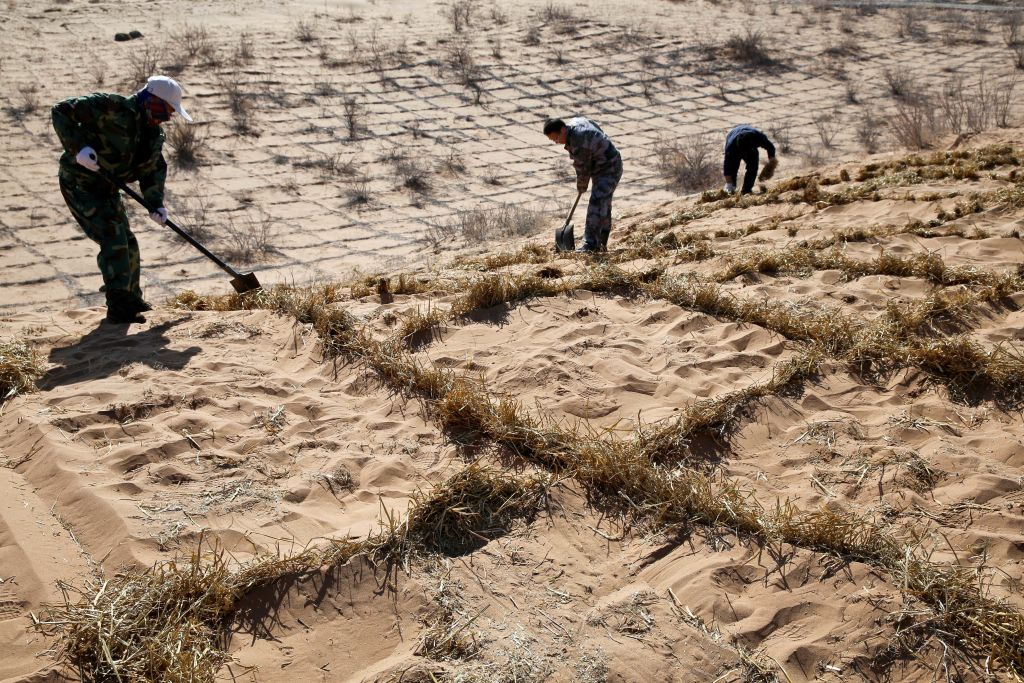 People pave straw checkerboard barriers to prevent and control desertification in Linze County of Zhangye City, northwest China's Gansu Province, on March 12, 2019. Linze County is located on the border of Badain Jaran Desert. In recent years, local authority continues to promote anti-desertification efforts, and a total of about 45,000 acres of trees have been planted.