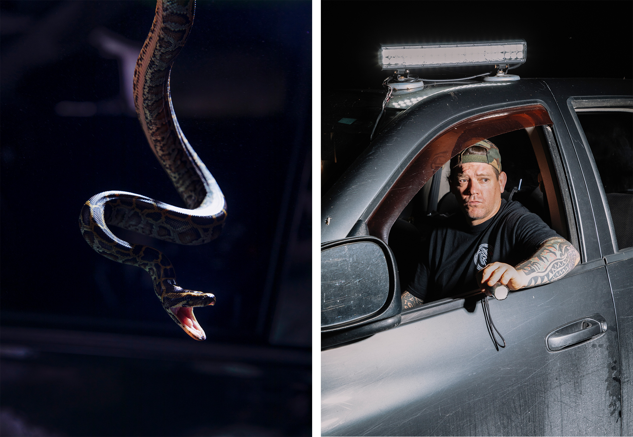 Left: A Burmese python hatchling that was caught by Tom Rahill; Right: Brian Hargrove searches for pythons out his truck window in the Everglades.