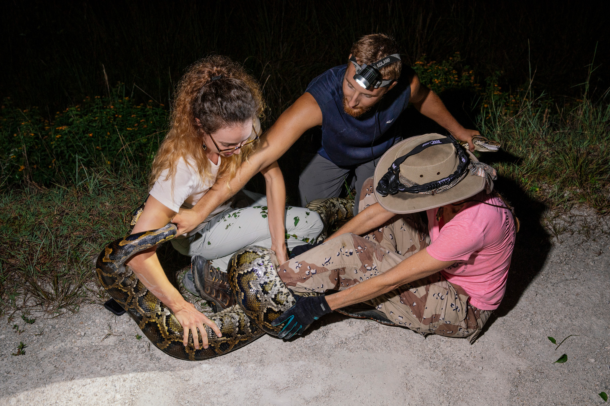 Deanna Kalil and Kevin Pavlidis unravel a fifteen-foot Burmese python that wrapped itself around the leg of Donna Kalil while they were hunting.
