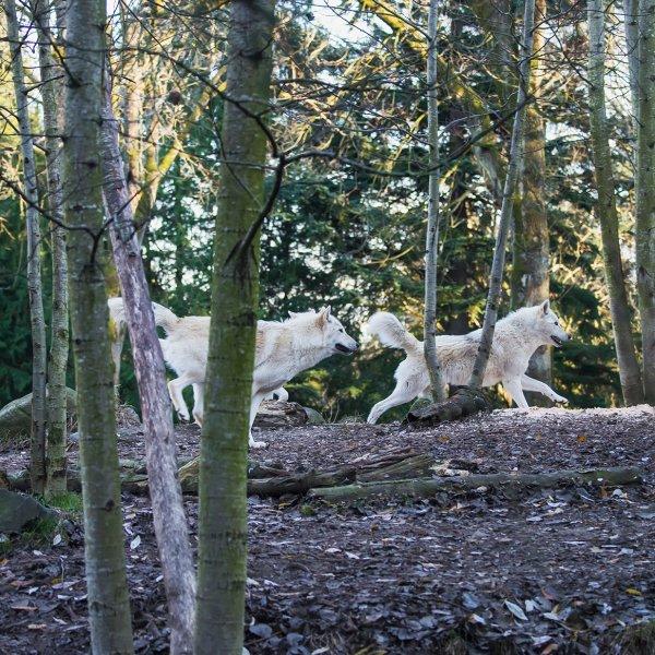 woodland-park-zoo-seattle-washington