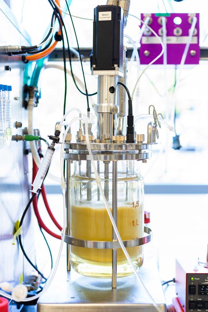 Bio-Nylon