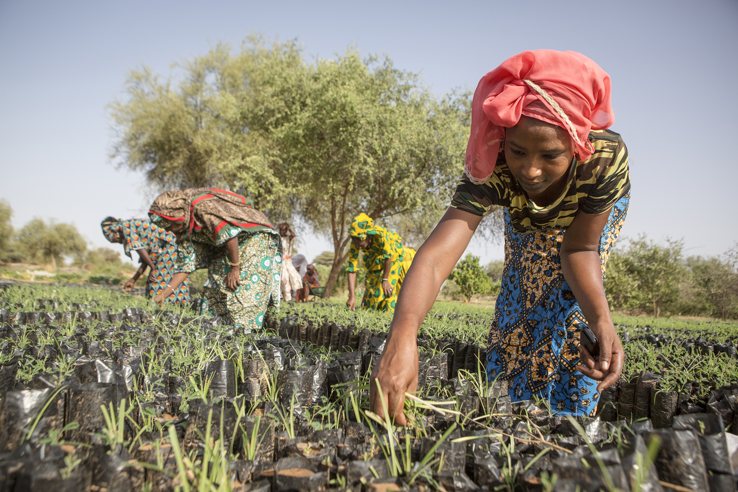 A young woman pulls weeds from seedlings that will be planted in a parcel contributing the Great Green Wall Project in Koyly Alpha, Senegal on Aug. 2, 2019.