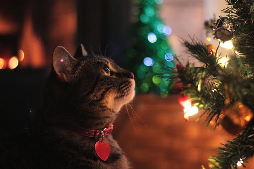 Это Похоже, Идеальная Снежная Праздничная Художественная Сцена была Компрометирована Озорной Кошкой thumbnail