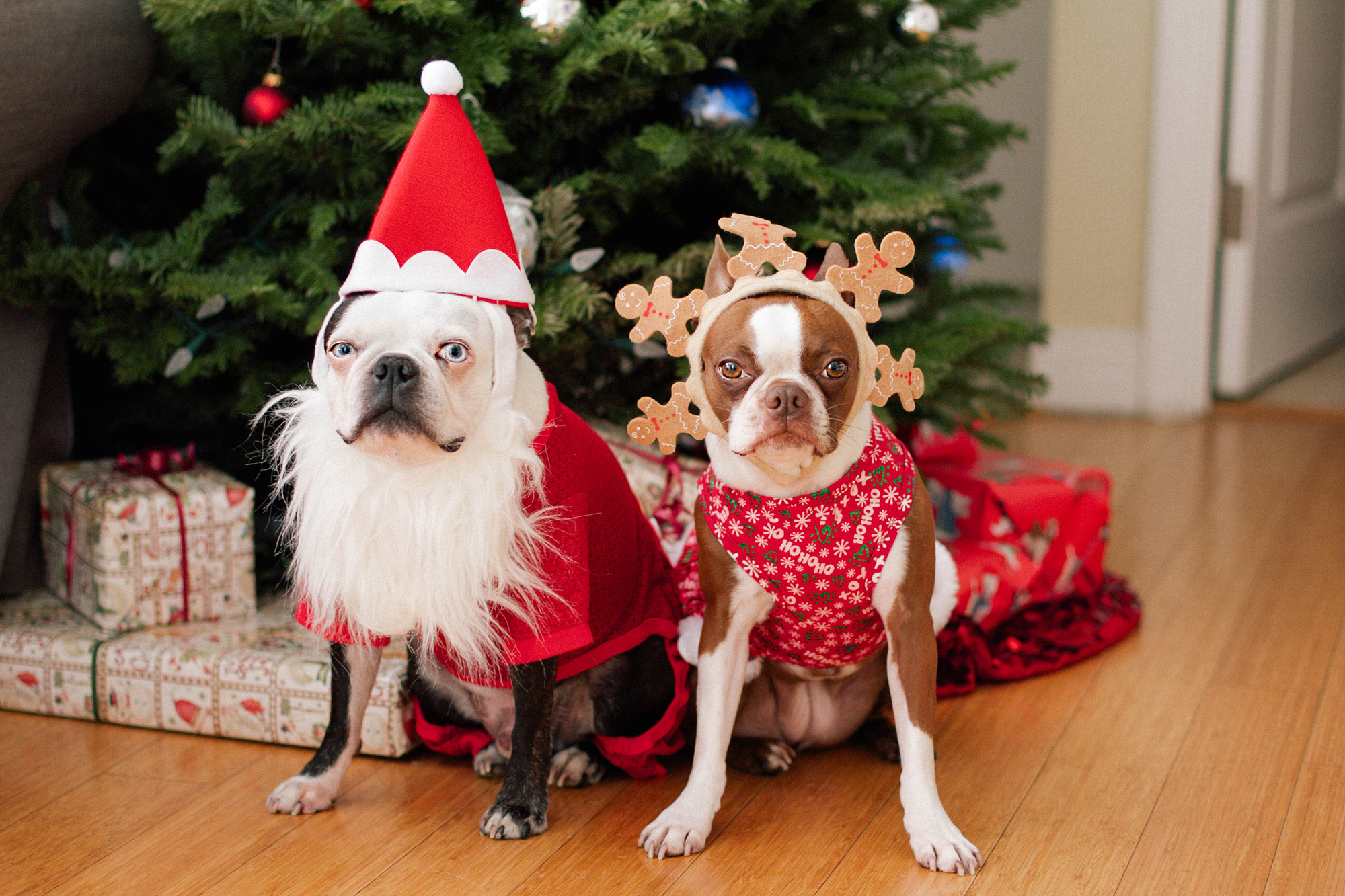 Смешные новогодние фотографии животных