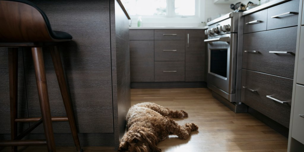 Dog Dancing Up a Storm in the Kitchen Is the True Party Animal of the Season