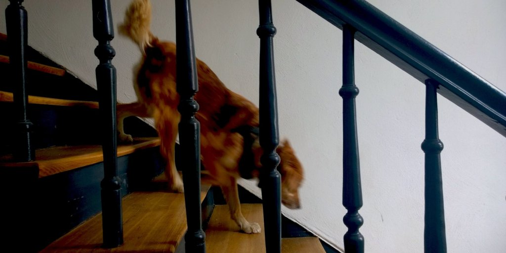 Dog Fearlessly Flying Down the Stairs Is One Way to Approach Life