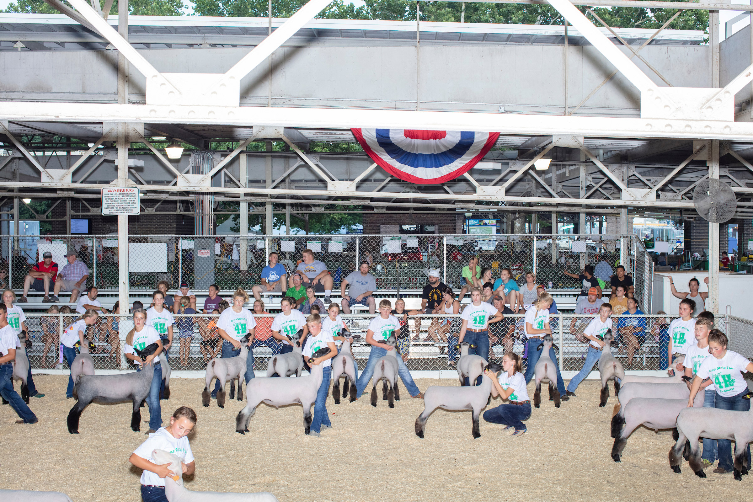 Children take part in the Intermediate 4-H Sheep Showmanship competition in the Sheep Barn at the Iowa State Fair in Des Moines on Aug. 11. The competitors are judged on their ability to display and control the sheep rather than on the characteristics of the animals themselves.