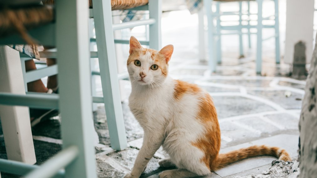 Meet Your New Spirit Animal With Cattitude. It's This Cat Who Says Hi in a Southern Accent