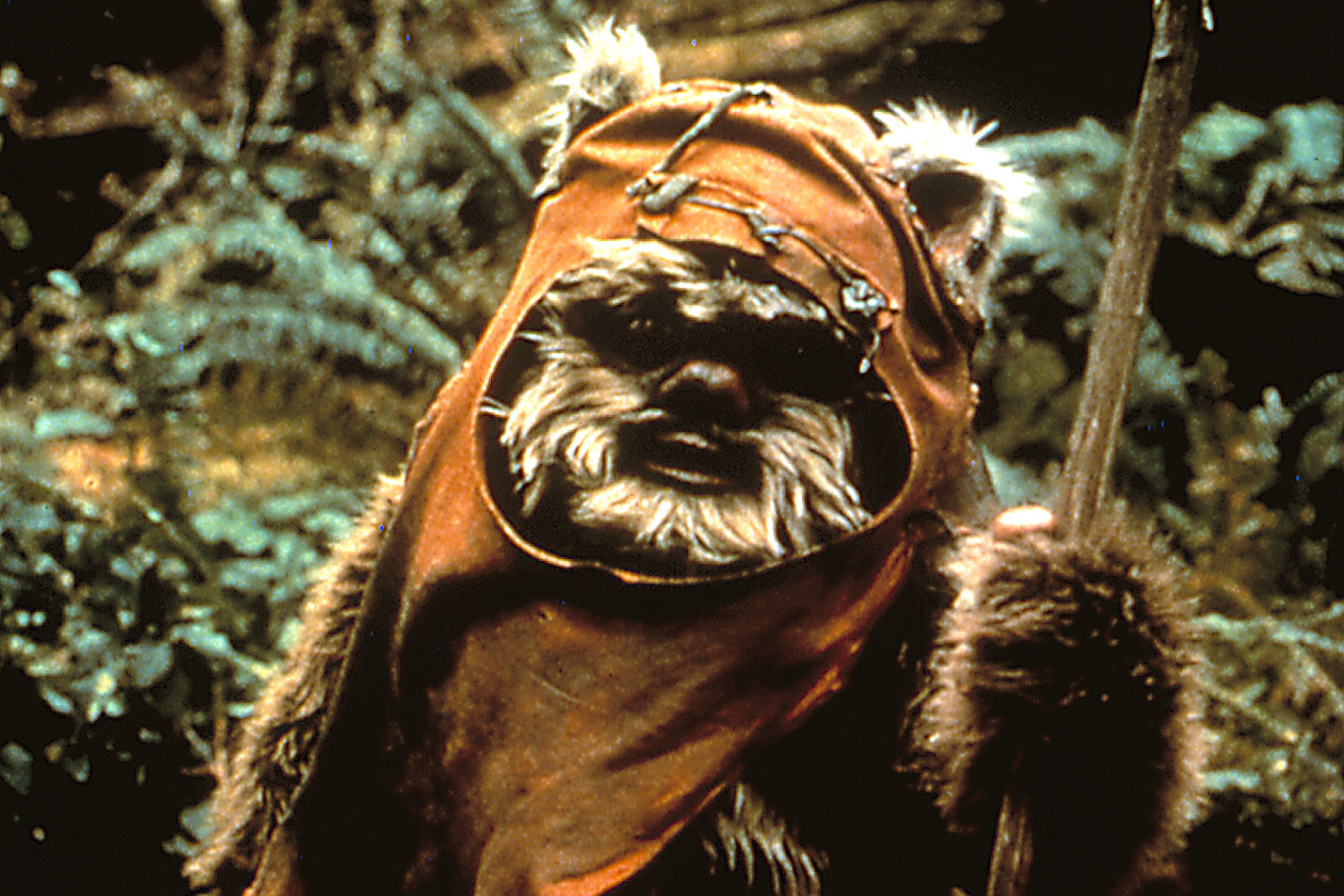 An Ewok in Star Wars: Return of the Jedi