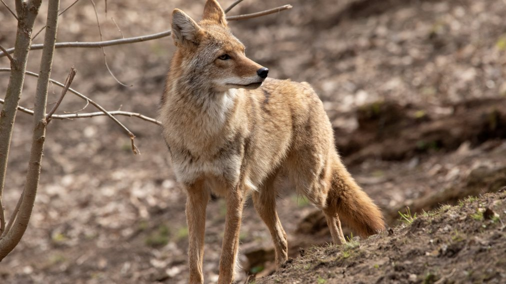 Trump Administration Authorizes 'Cyanide Bombs' to Kill Predators Again, Months After Backlash