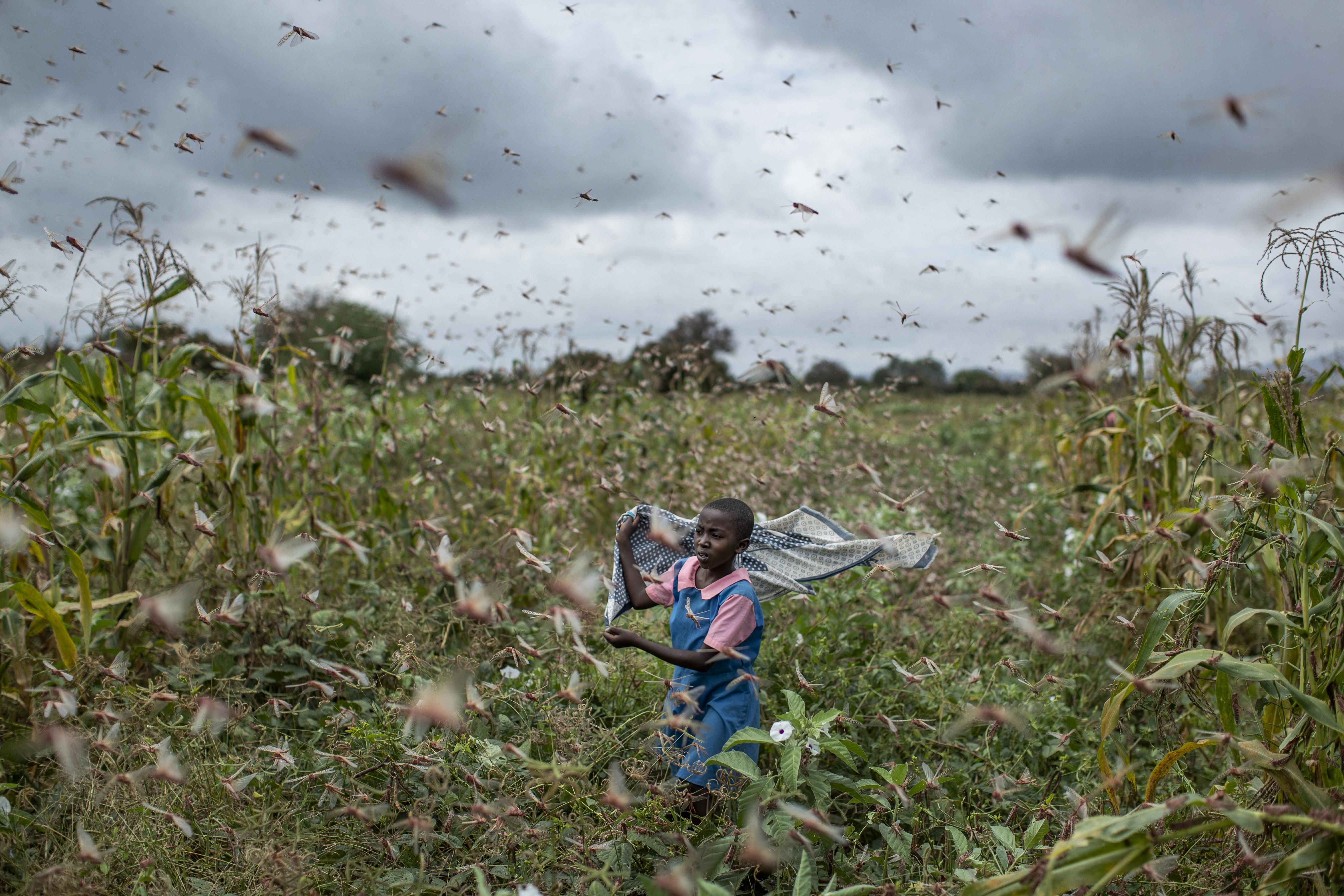 'This Is Huge': Worst Locust Swarm in Decades Destroy Crops in East Africa