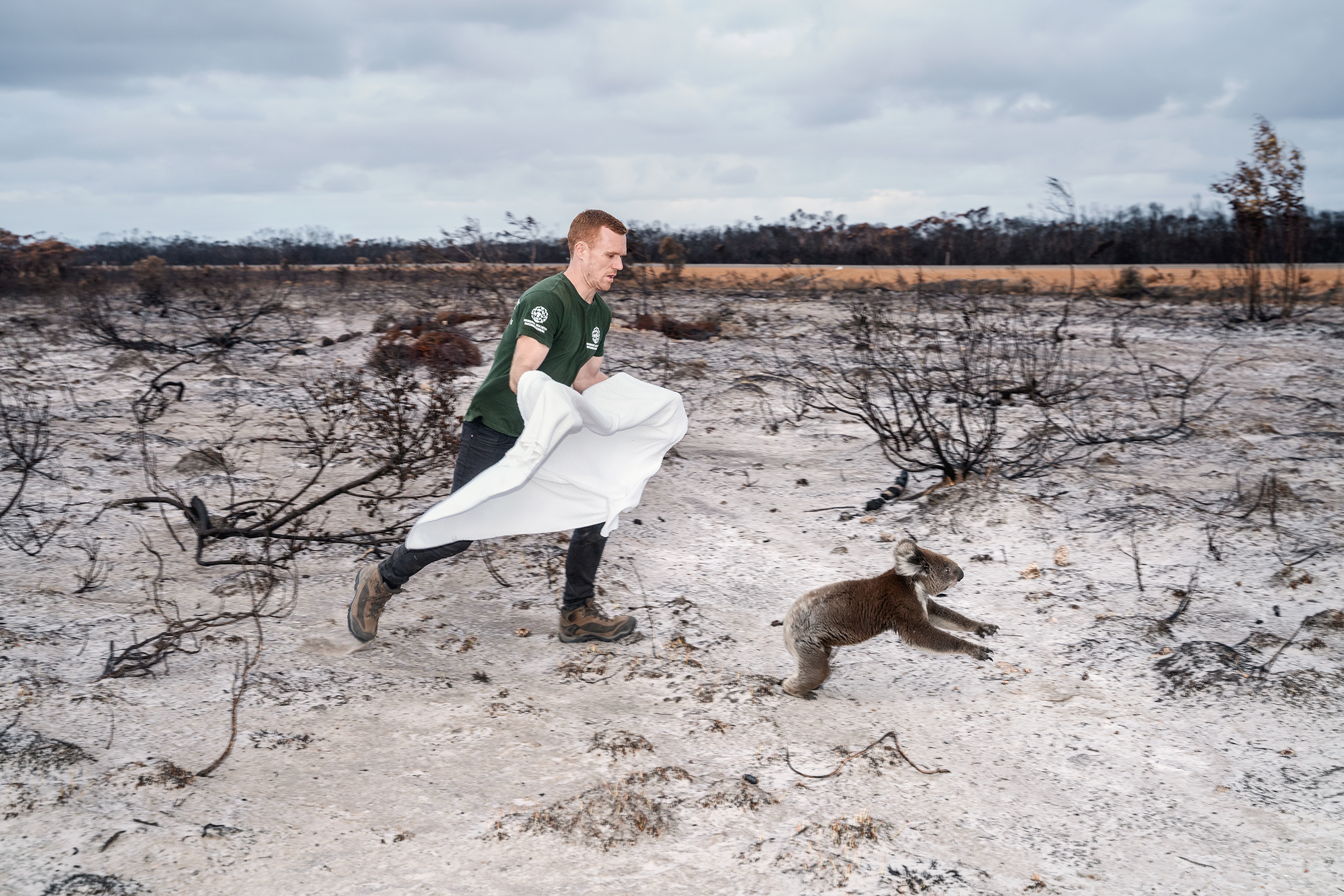 A koala is rescued on Jan. 16 from Kangaroo Island, an area devastated by Australia's bushfires.