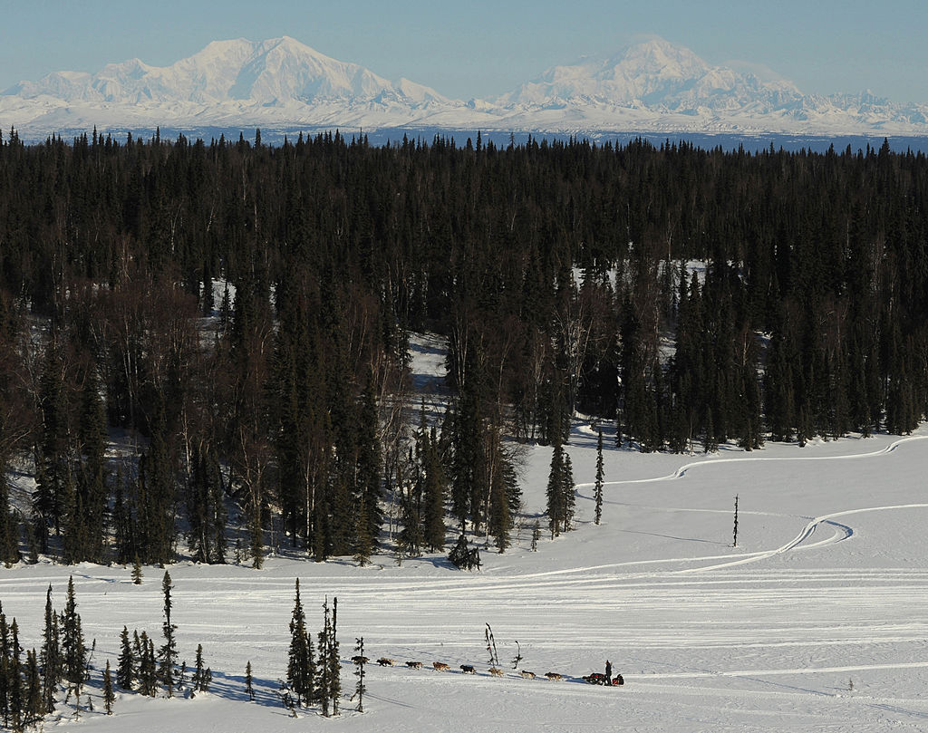 A musher crosses the taiga forest between the Skwentna and Finger Lake checkpoints in Alaska during the Iditarod sled dog race on Monday March 7, 2011.