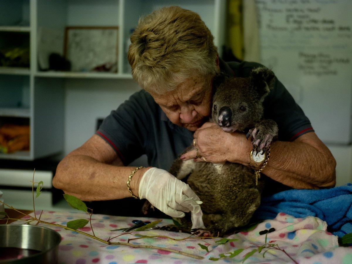 Port Macquarie Koala Hospital volunteer Barbara Barrett treats a bushfire survivor, Baz, on Dec. 6, 2019.