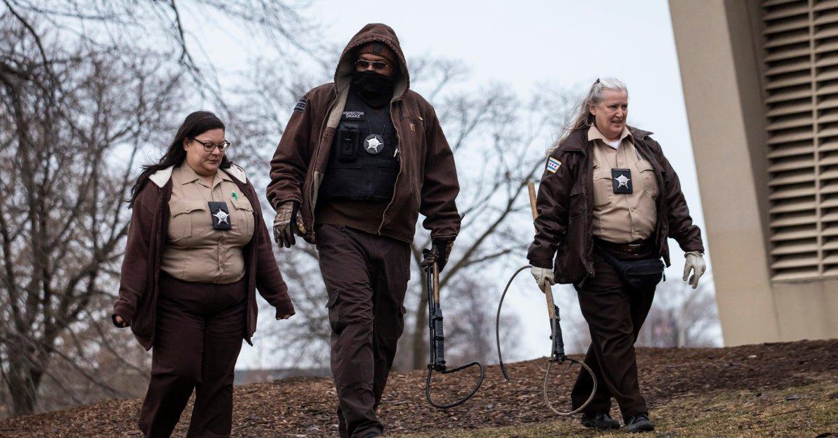 Чикаго на охоте на койотов после того, как 5-летний подросток подвергся нападению в популярном парке thumbnail