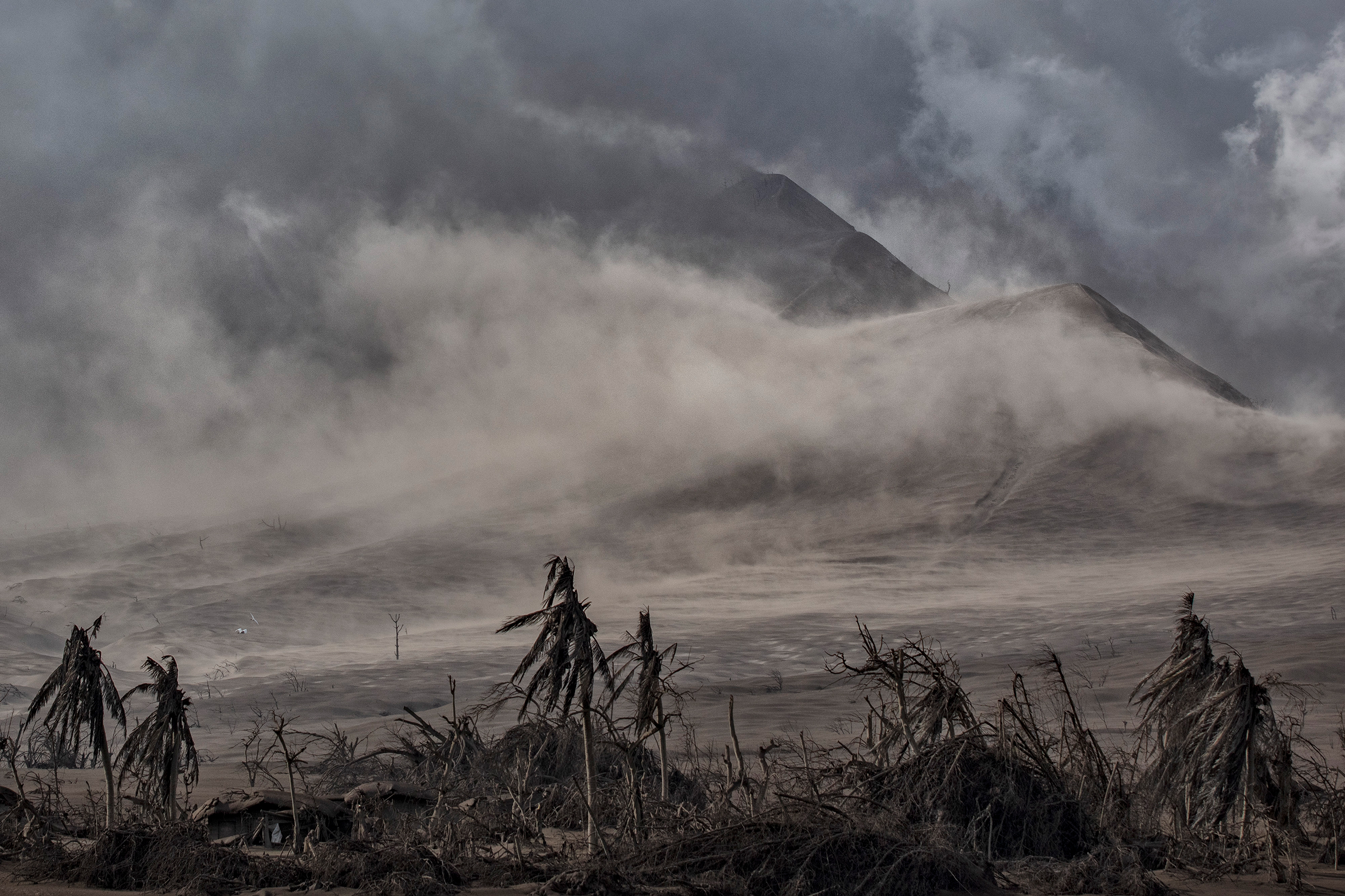 Dead trees near the Taal volcano's crater are covered in volcanic ash on Jan. 14.