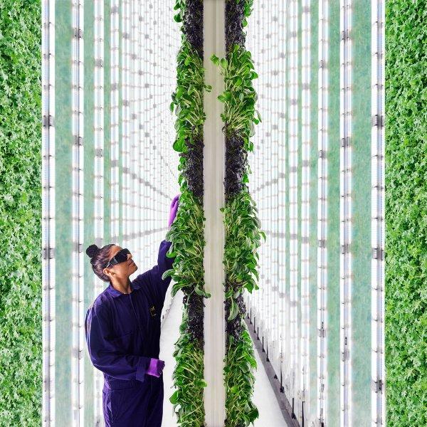 rethinking-food-environment