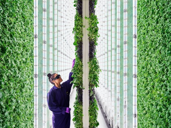 The Future of Food Vertical Farms
