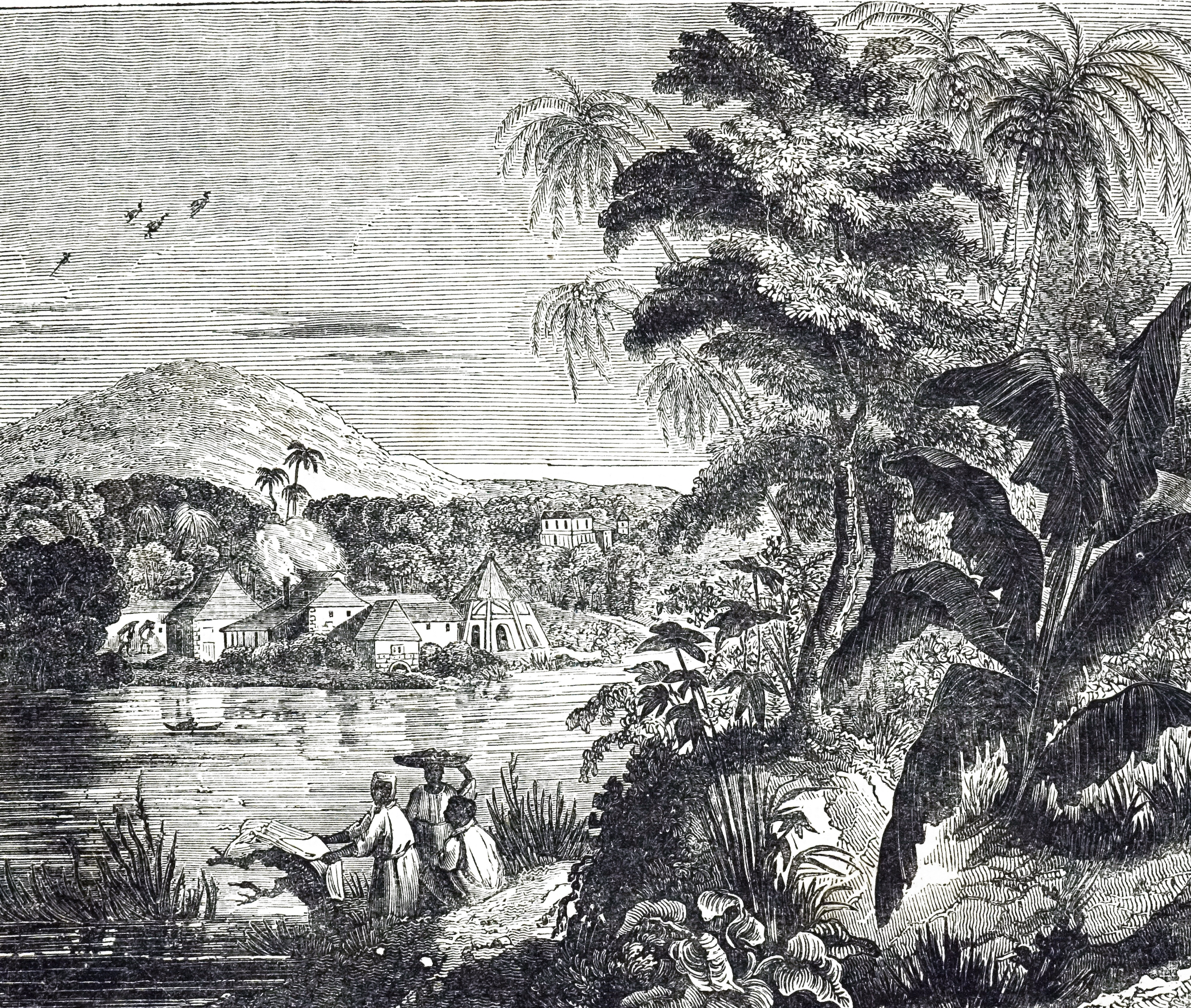An engraving depicting a Jamaican sugarcane plantation during the sugar boom. African slaves harvested the sugar cane for their British owners. Dated 19th century.
