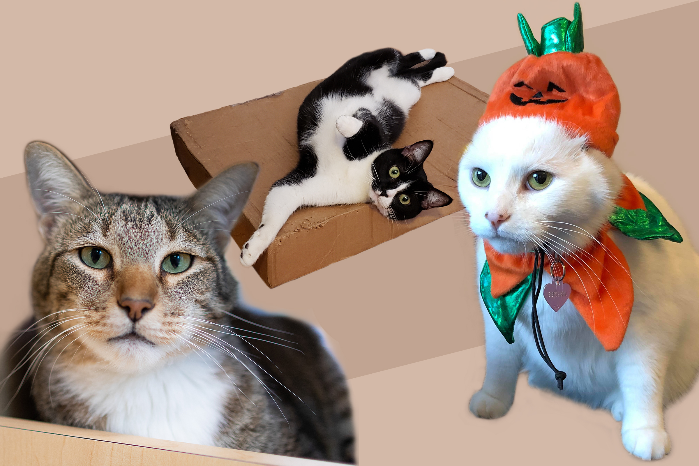 Famous Internet Cats Ranking Best Funny Cat Videos Memes Time