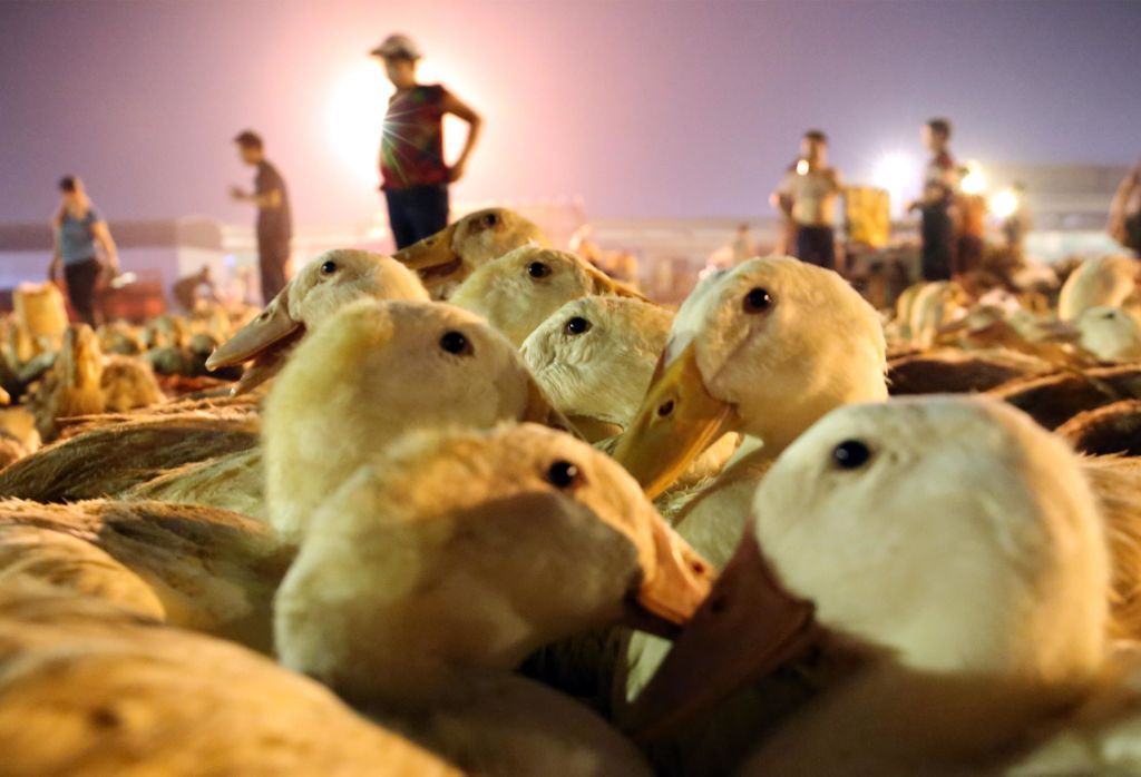 Vendors sell ducks ahead of Zhongyuan Festival, also known as Ghost Festival, at an agriculture wholesale market on Aug. 13, 2019 in Liuzhou, Guangxi Zhuang Autonomous Region of China.