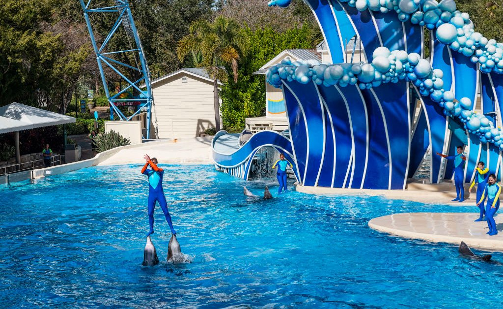 SeaWorld Ends Dolphin 'Surfing' and Related Stunts During Its Shows
