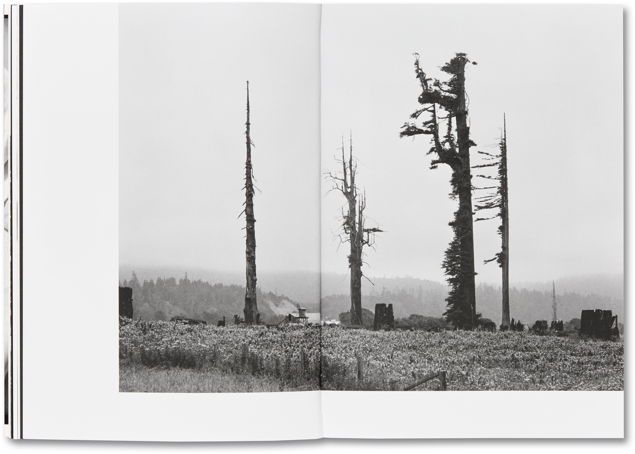 Redwood trees and stumps on Redwood Highway, Scotia, Calif., 1939.