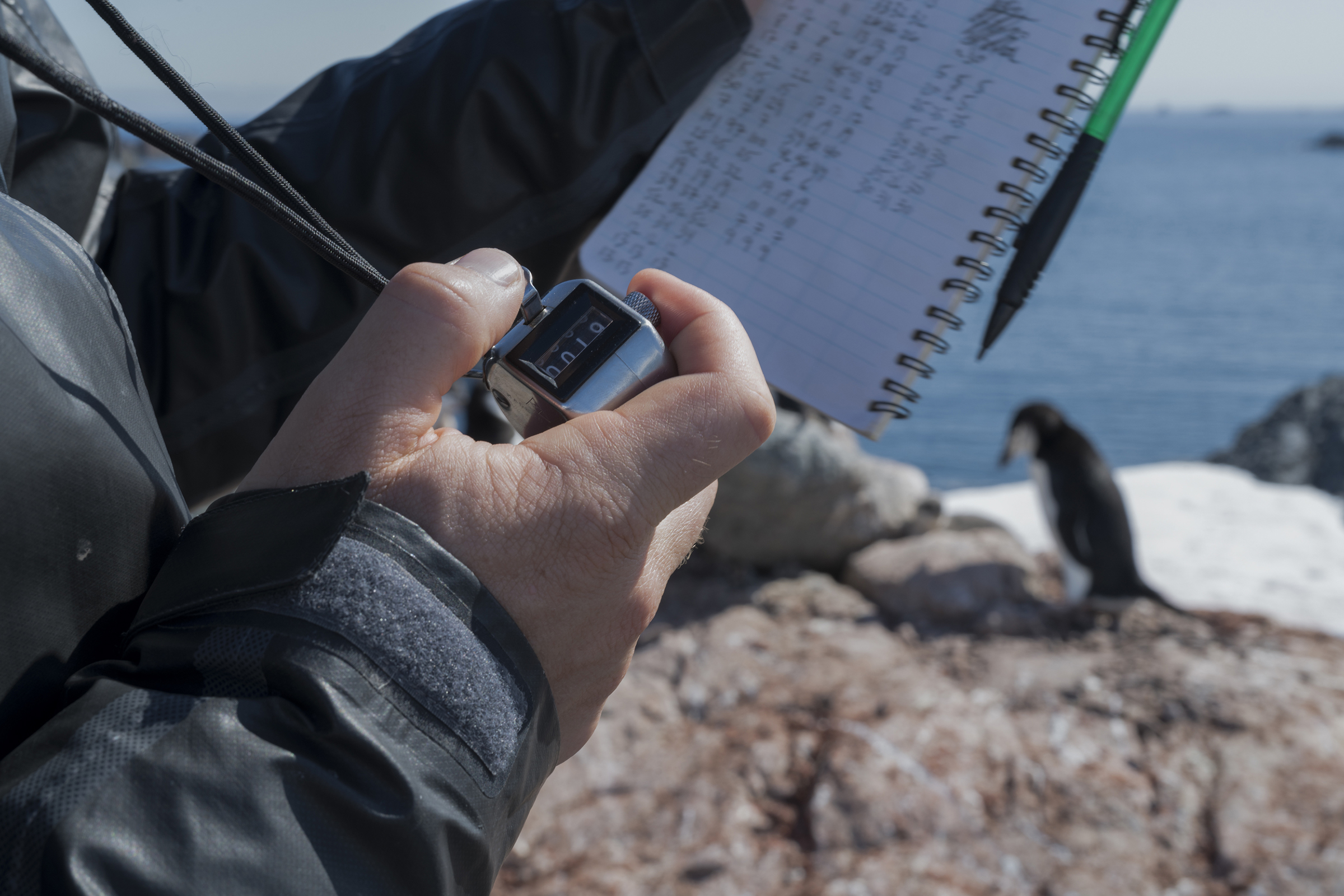 Scientist Noah Strycker from Stony Brook University Scientist uses a clicker to count chinstrap penguins on Quinton Point, Anvers Island in the Antarctic, on Feb. 4, 2020.
