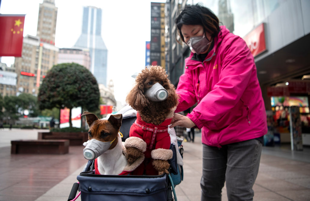 A woman pushes a stroller with two dogs wearing masks along a street in Shanghai on Feb. 19, 2020.