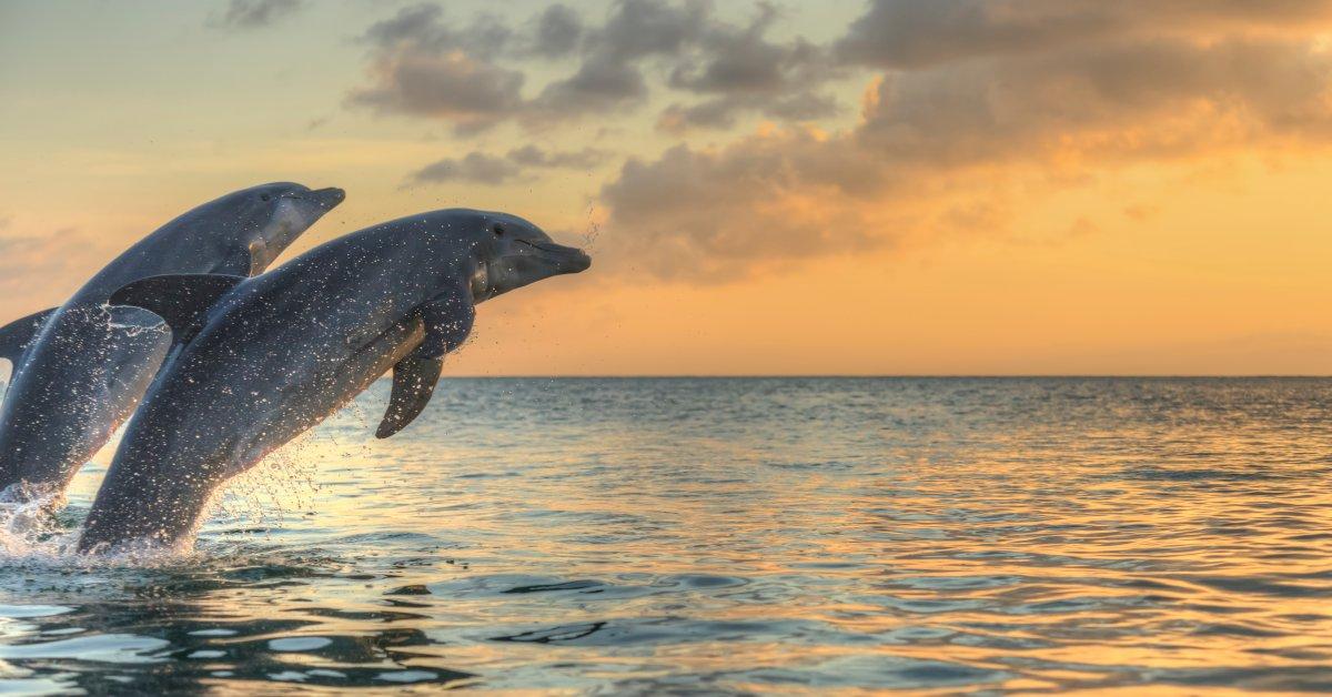 $20,000 Reward Offered After Dolphins Found Shot Dead in Florida