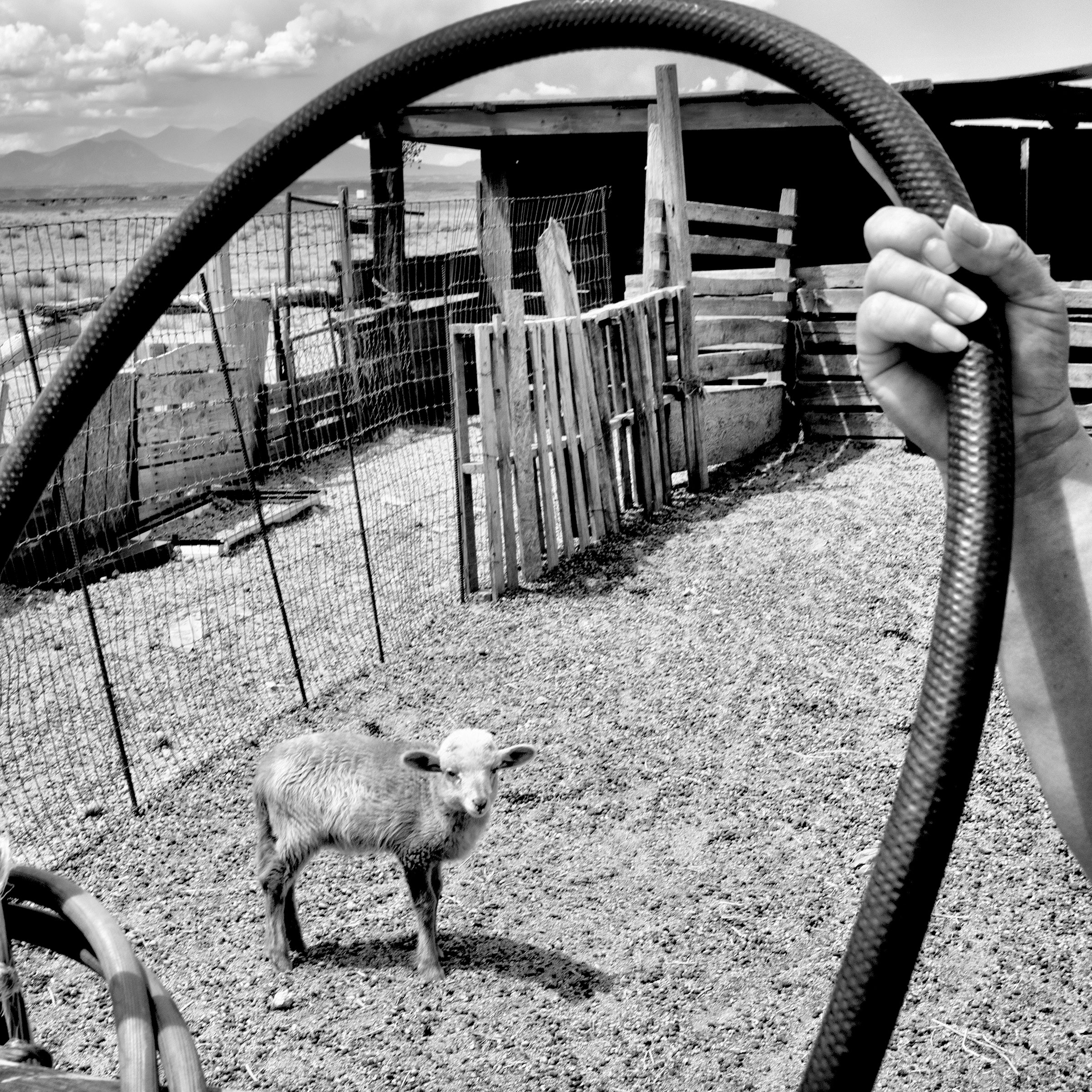 A sheep corral without running water in Black Falls, Ariz.