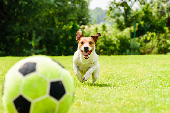 A Dog Entered a Soccer Game and Proved It's the Real MVP