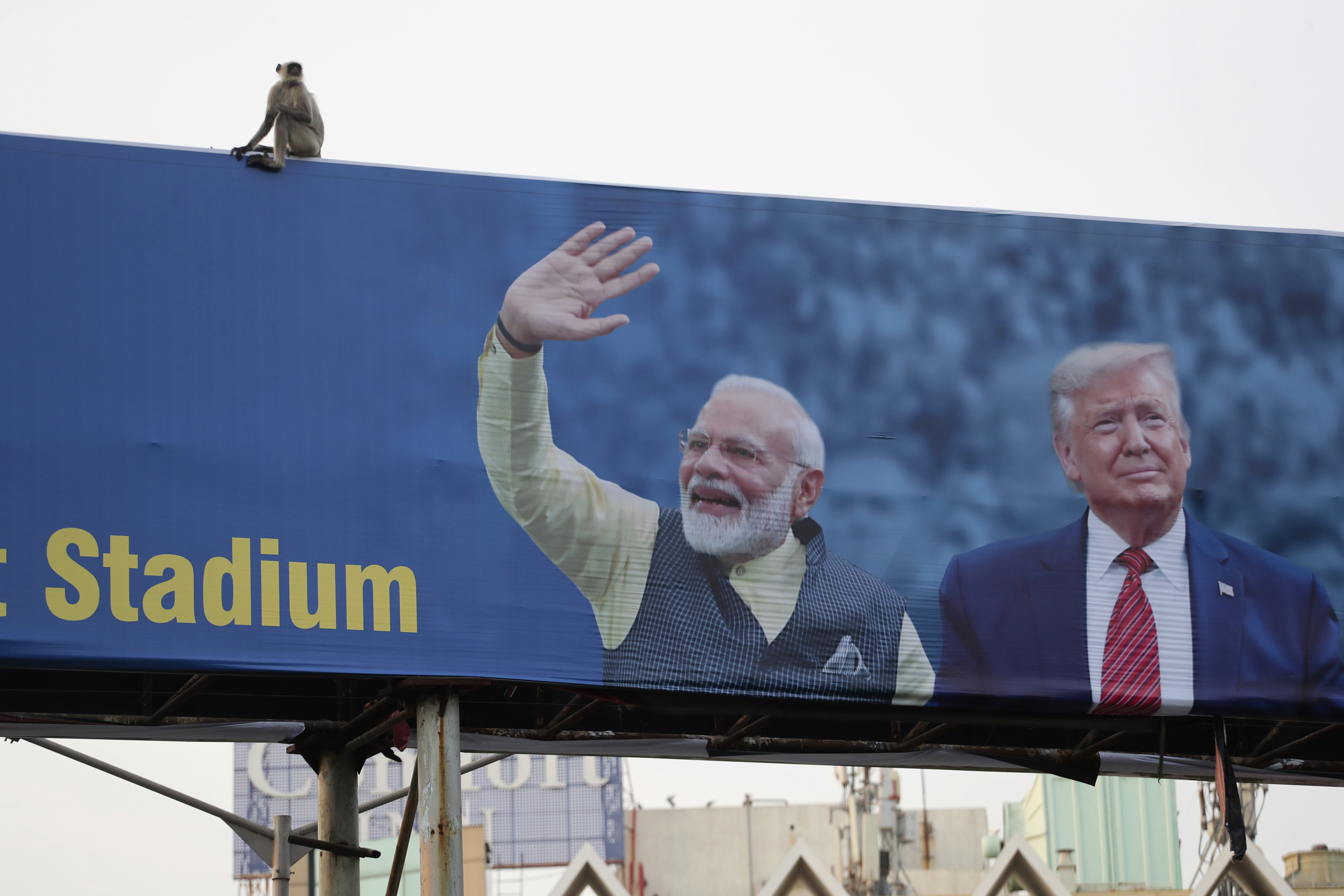 A monkey sits on a hoarding welcoming U.S. President Donald Trump ahead of his visit to Ahmedabad, India on  Feb. 19, 2020.