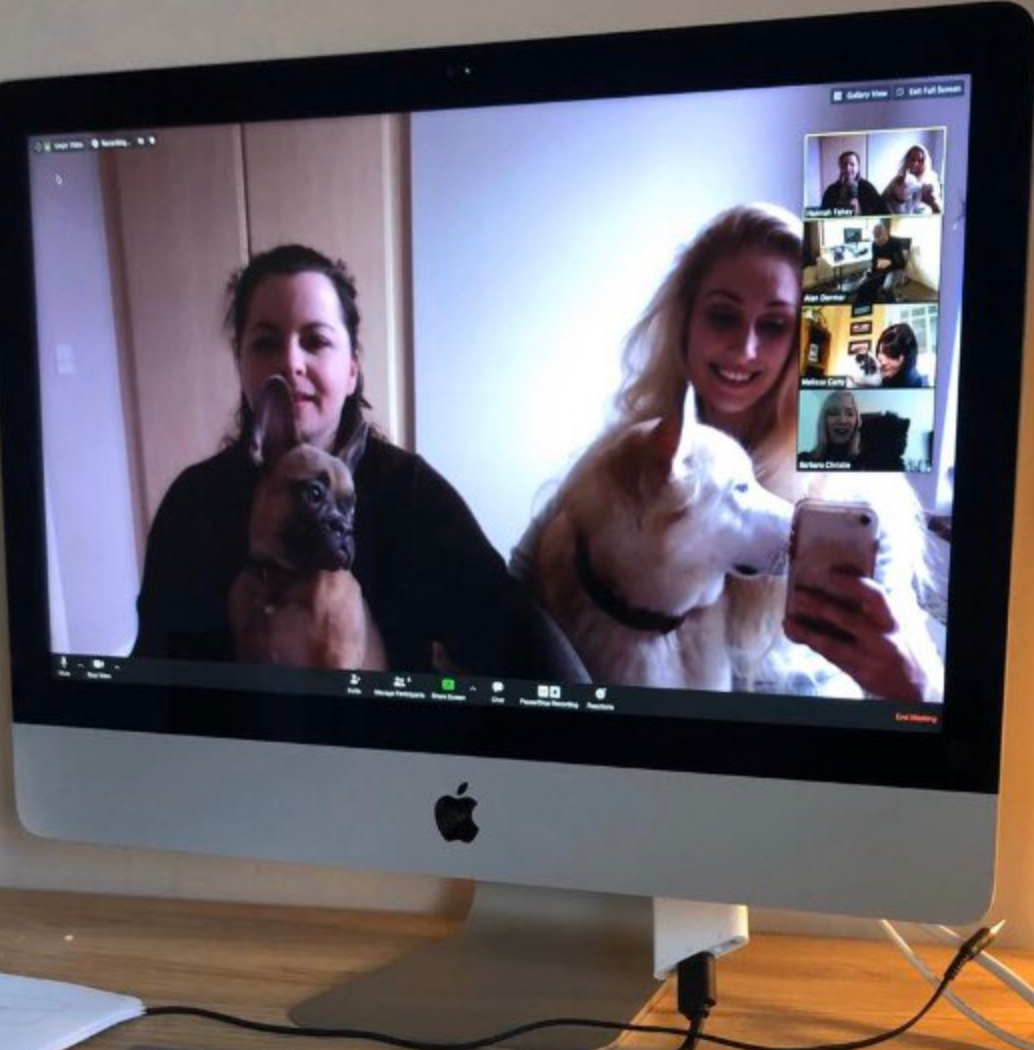 Dr. Fahey's dogs joined her video call.