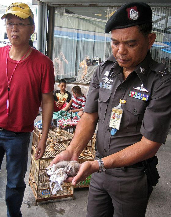 Thailand-wildlife-crime, by Claire Trusc