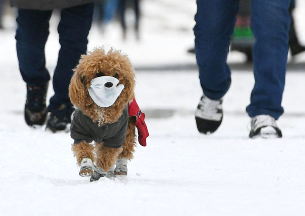 can dogs get coronavirus  hong kong pet tests positive