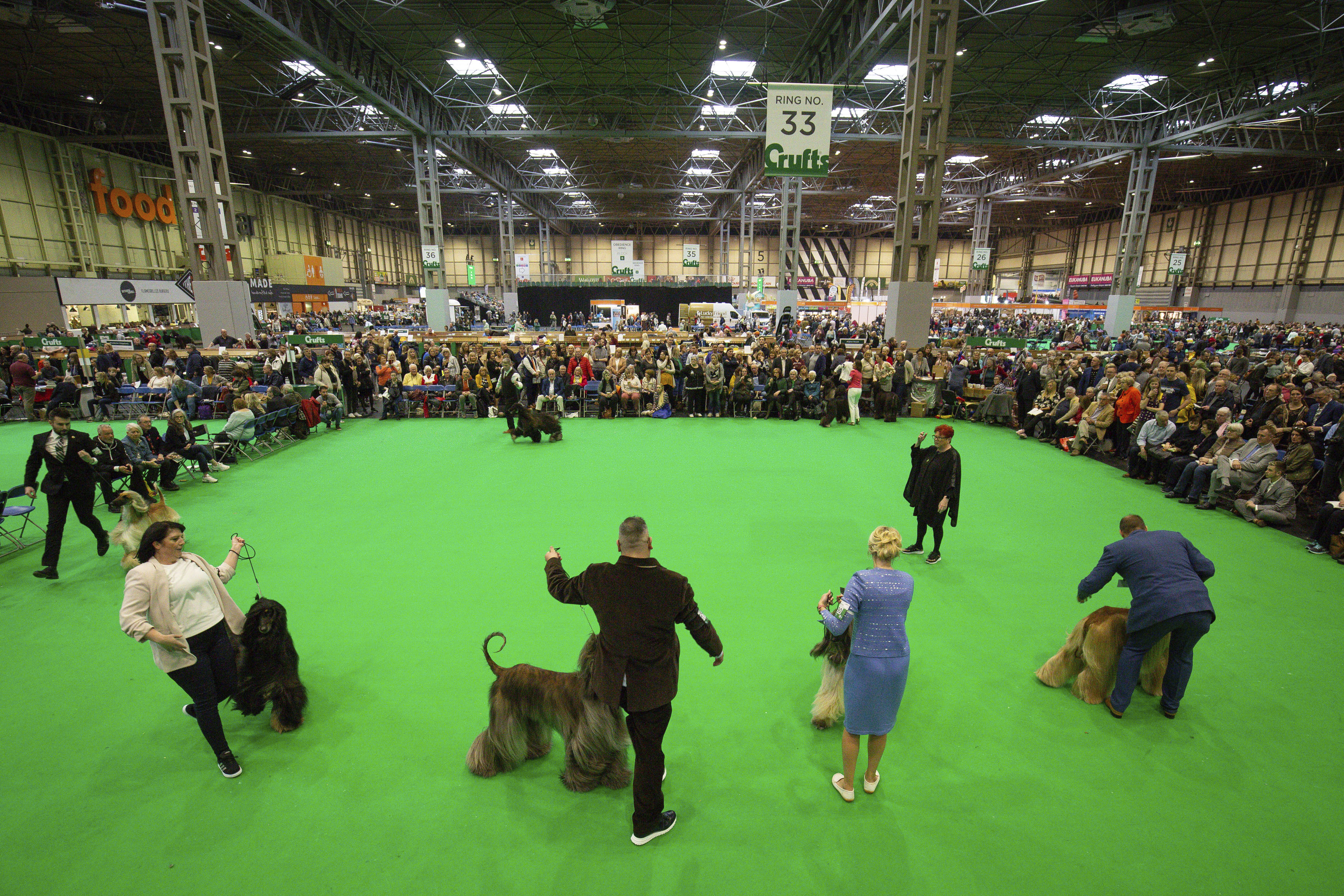 Dogs compete at the Birmingham National Exhibition Centre (NEC) during the final day of the Crufts Dog Show on March 8, 2020.
