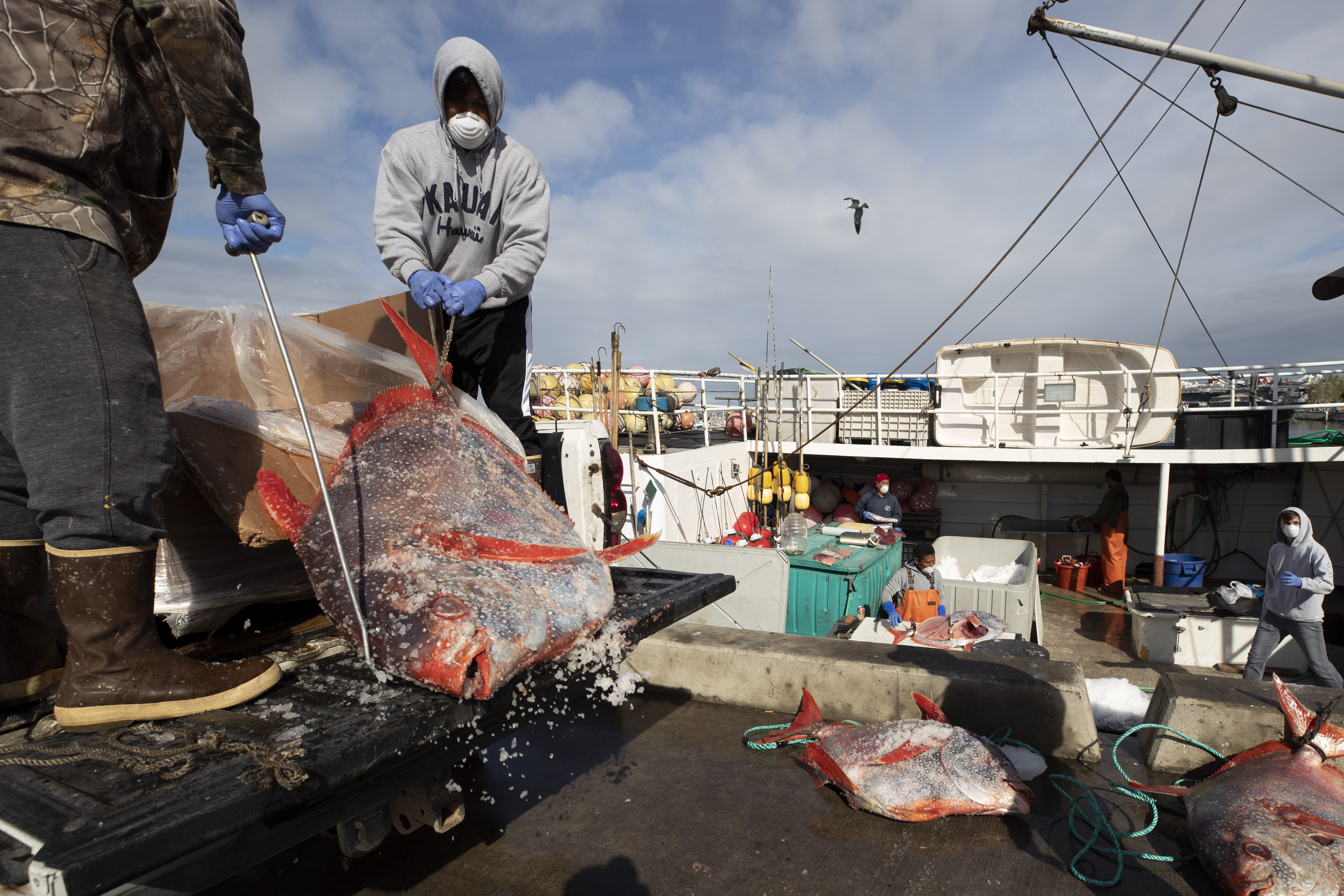 Opah fish are hauled onto a dock for sale on March 20, 2020, in San Diego.