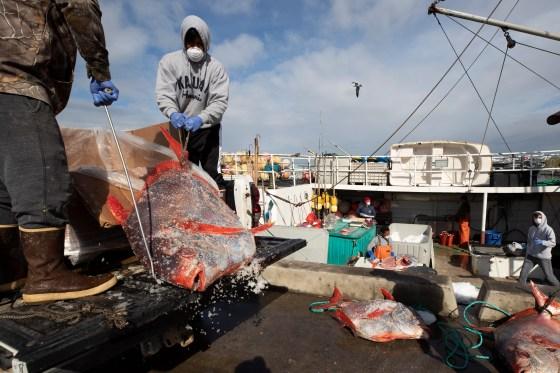 Virus Outbreak Returning From Sea