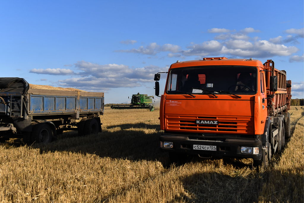 Harvesting wheat grains in a field of the Posevninskaya poultry farm in Cherepanovo District in September 2019.