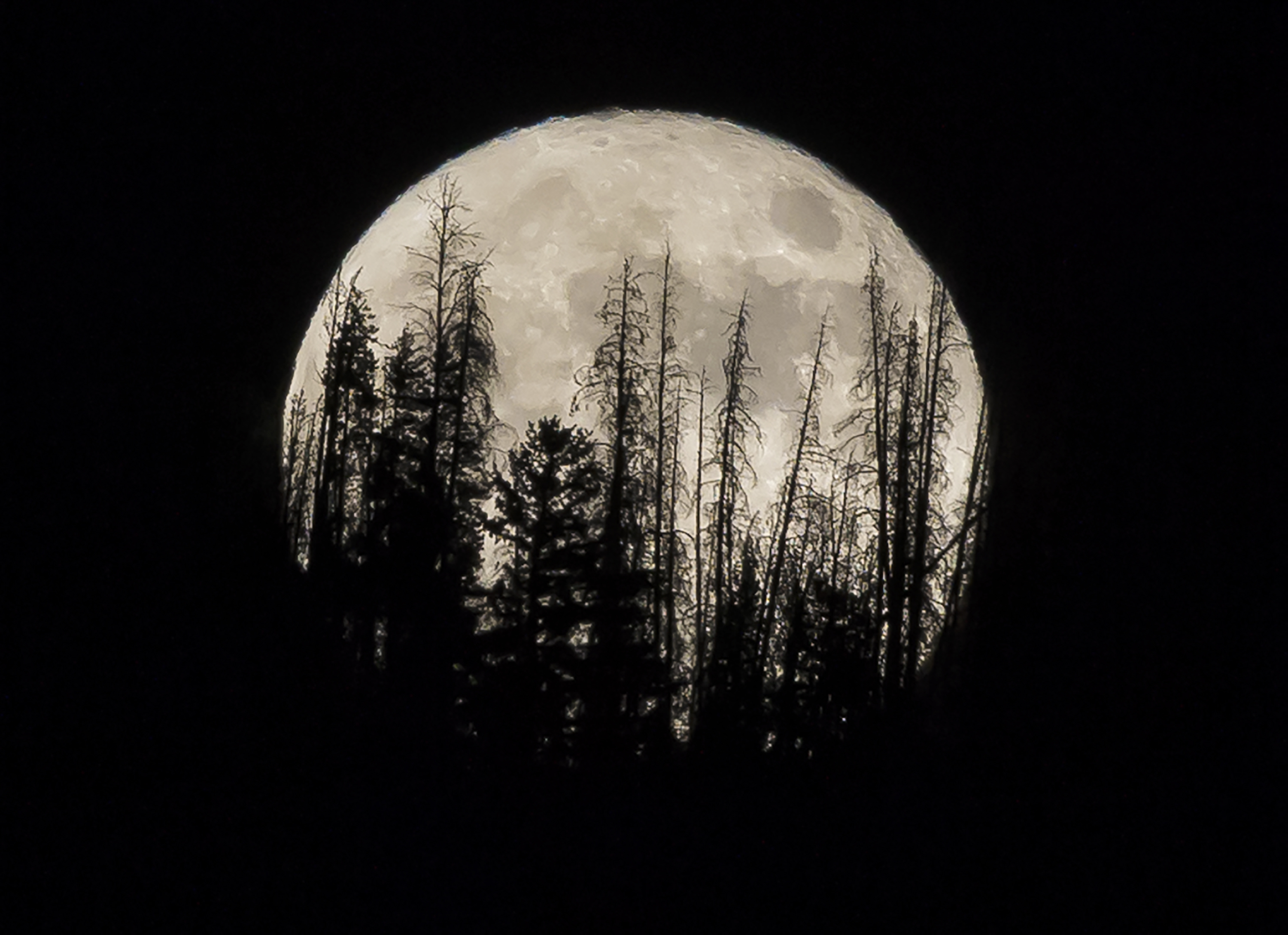 In this file photo, evergreen trees are silhouetted on the mountain top as a supermoon rises over over the Dark Sky Community of Summit Sky Ranch in Silverthorne, Colo. on Nov. 14, 2016.