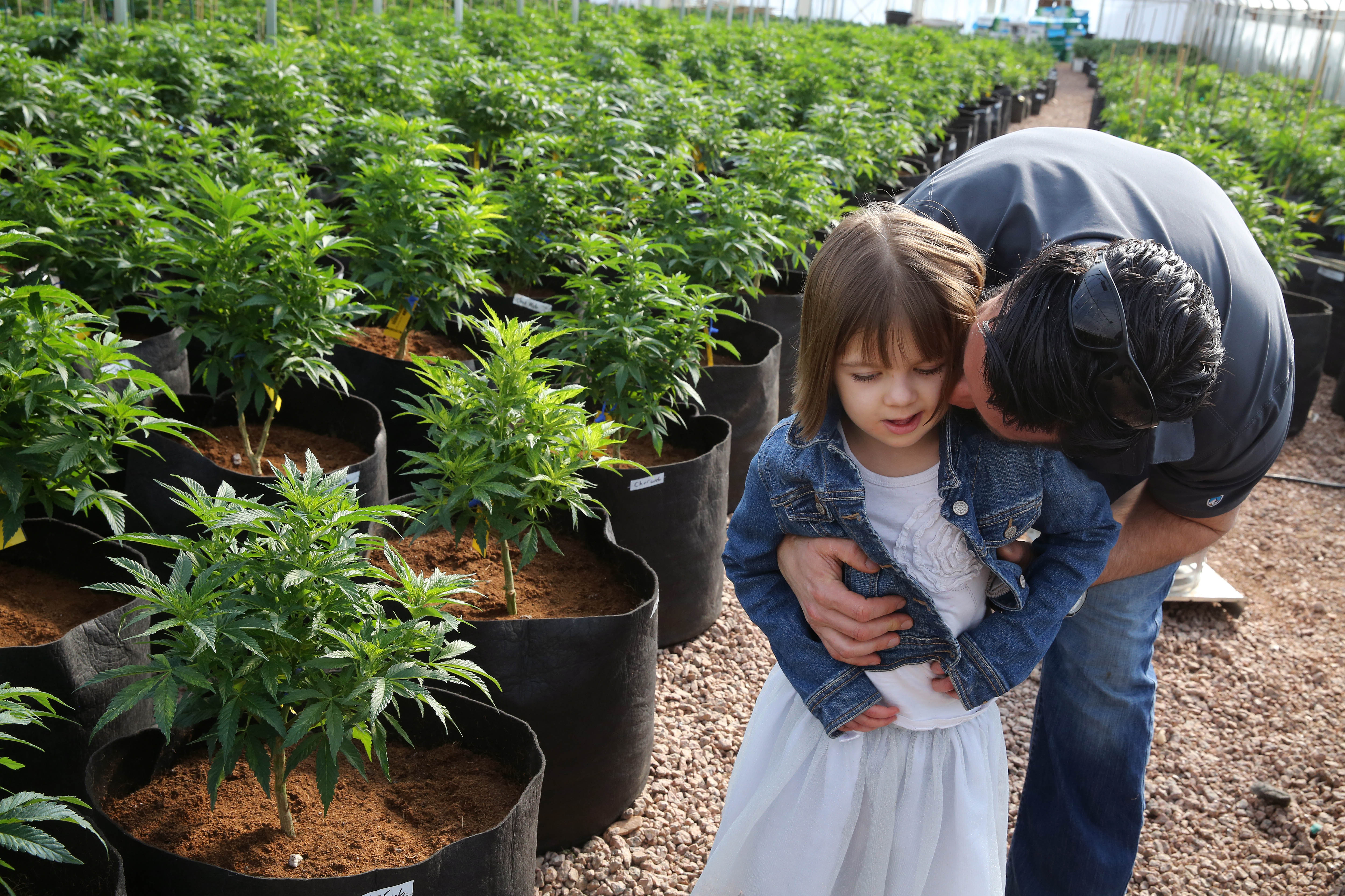 In this Feb. 7, 2014 photo, Matt Figi hugs and tickles his once severely-ill 7-year-old daughter Charlotte, as they wander around inside a greenhouse for a special strain of medical marijuana known as Charlotte's Web, which was named after the girl early in her treatment, in a remote spot in the mountains west of Colorado Springs, Colo.