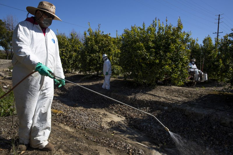 Agricultural laborers spray against insects and weeds inside the orchards of a fruit farm in Mesa, California.