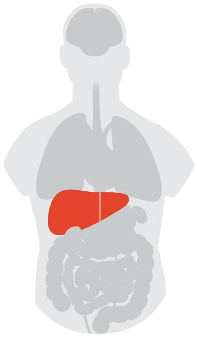 unusual symptoms of coronavirus: what we know so far Unusual Symptoms of Coronavirus: What We Know So Far  Liver
