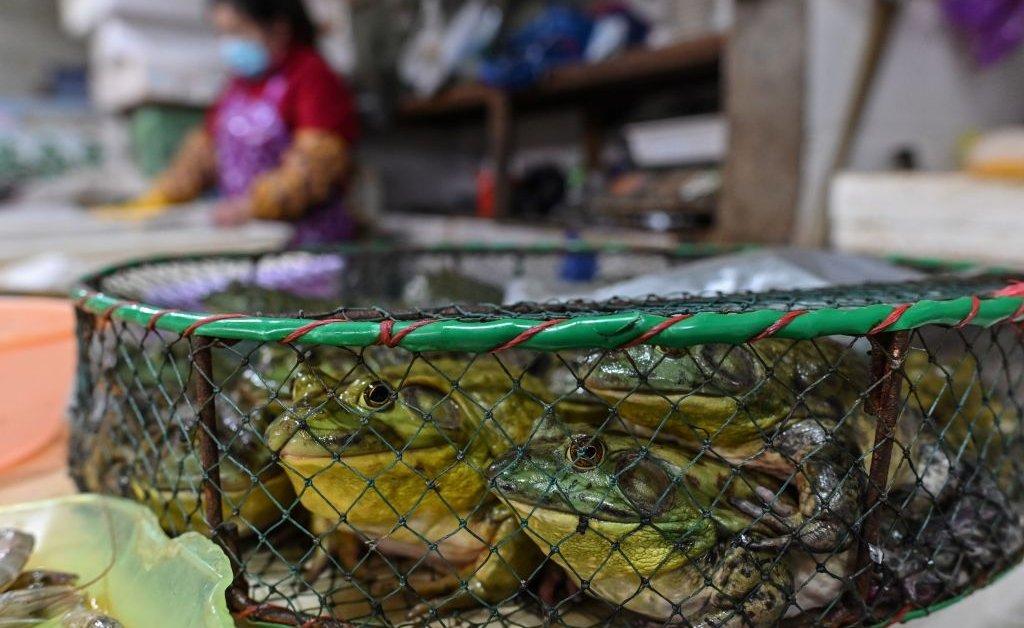 Рынки живых животных должны быть улучшены, а не вне закона, говорят ВОЗ thumbnail