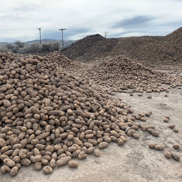 Silver Creek Seed, a farm in Picabo, Idaho, has dumped tons of potatoes as commercial demand for the products has dropped amid the coronavirus pandemic.