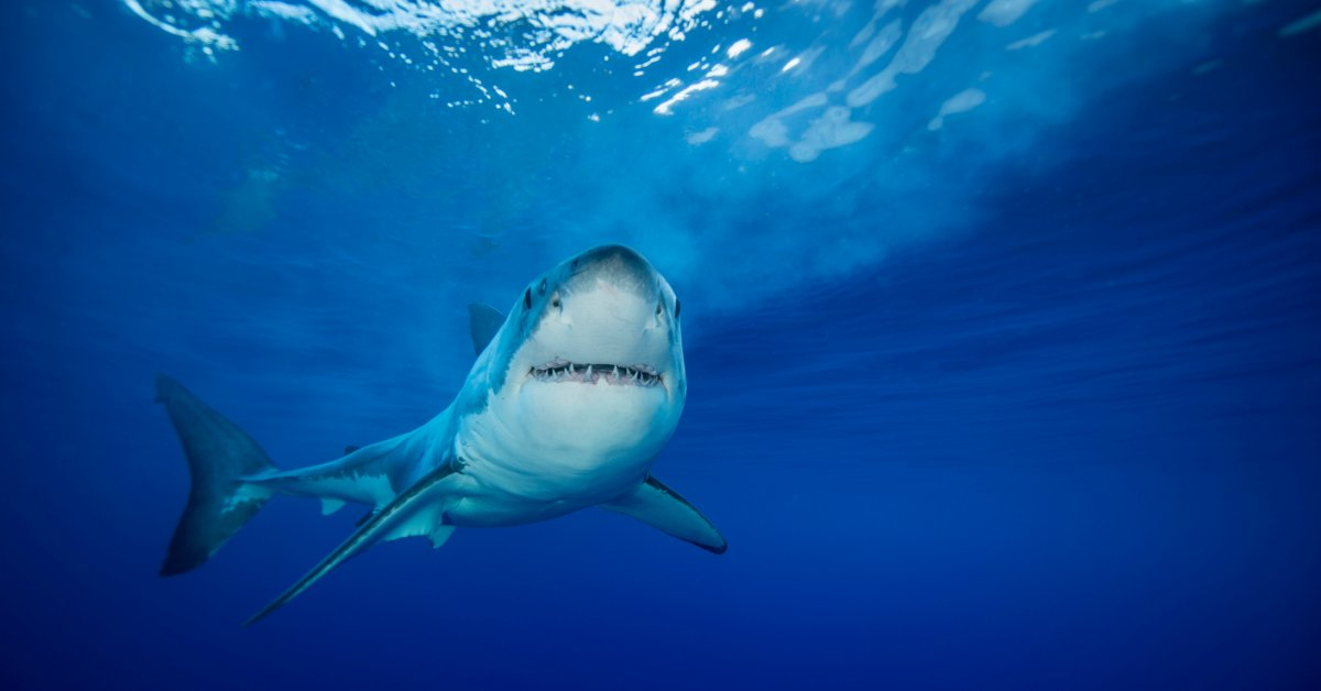 Гонконг захватил рекордный улов контрабандного акульего плавника thumbnail