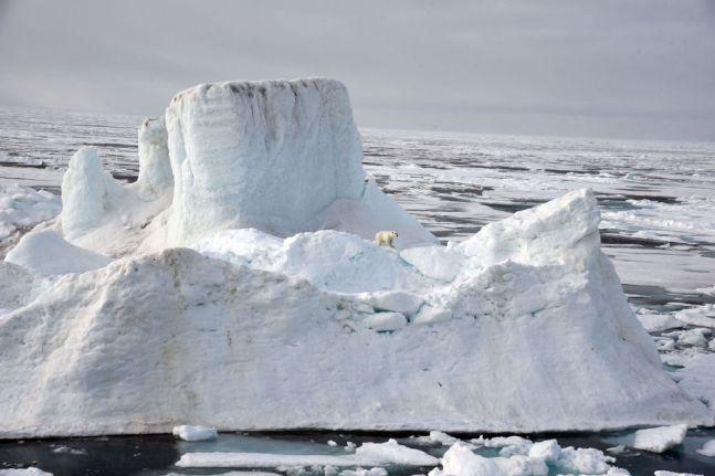 Polar bear in the Arctic Ocean